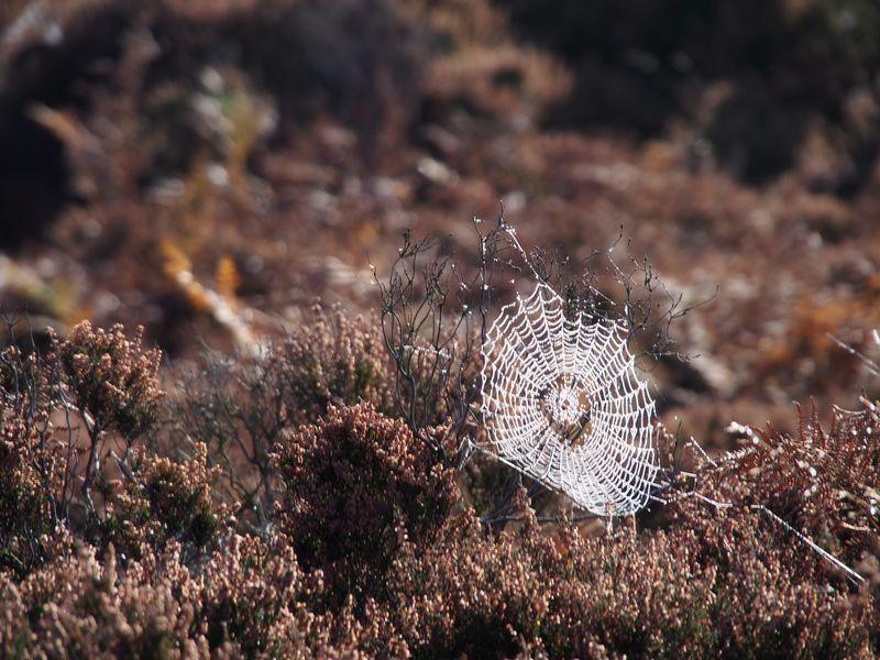 Web on Bamford Moor